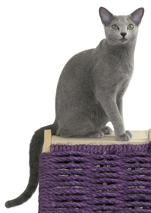 ロシアンブルー|当たる無料猫占い