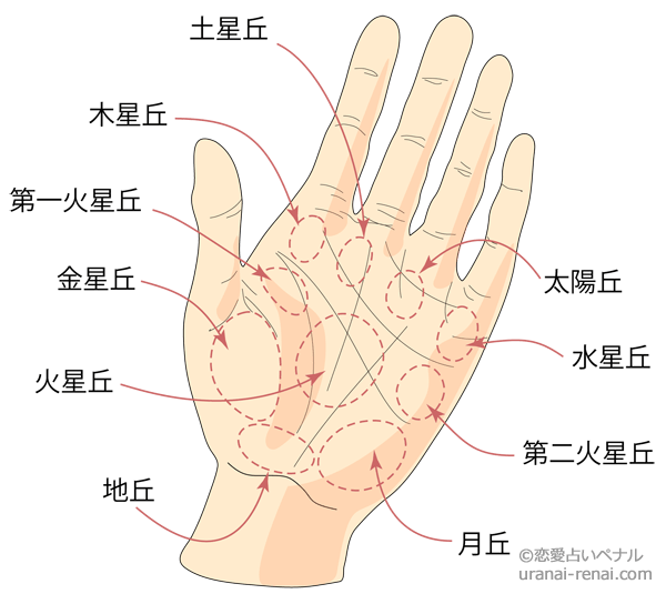 掌のふくらみと名称